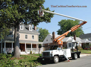 Tim Corbin's Tree Service trucks on the job