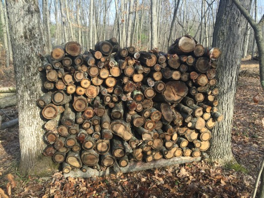 Firewood Stacked Between Trees